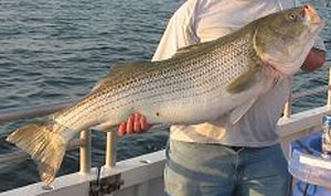 New jersey fishing reports for Fortescue fishing report